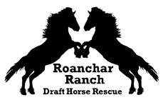 Roanchar Ranch Draft Horse Rescue